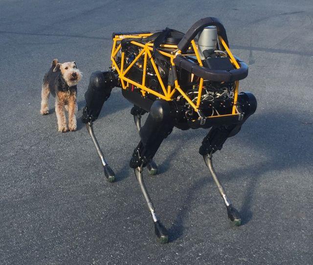 robot-v-dog-2
