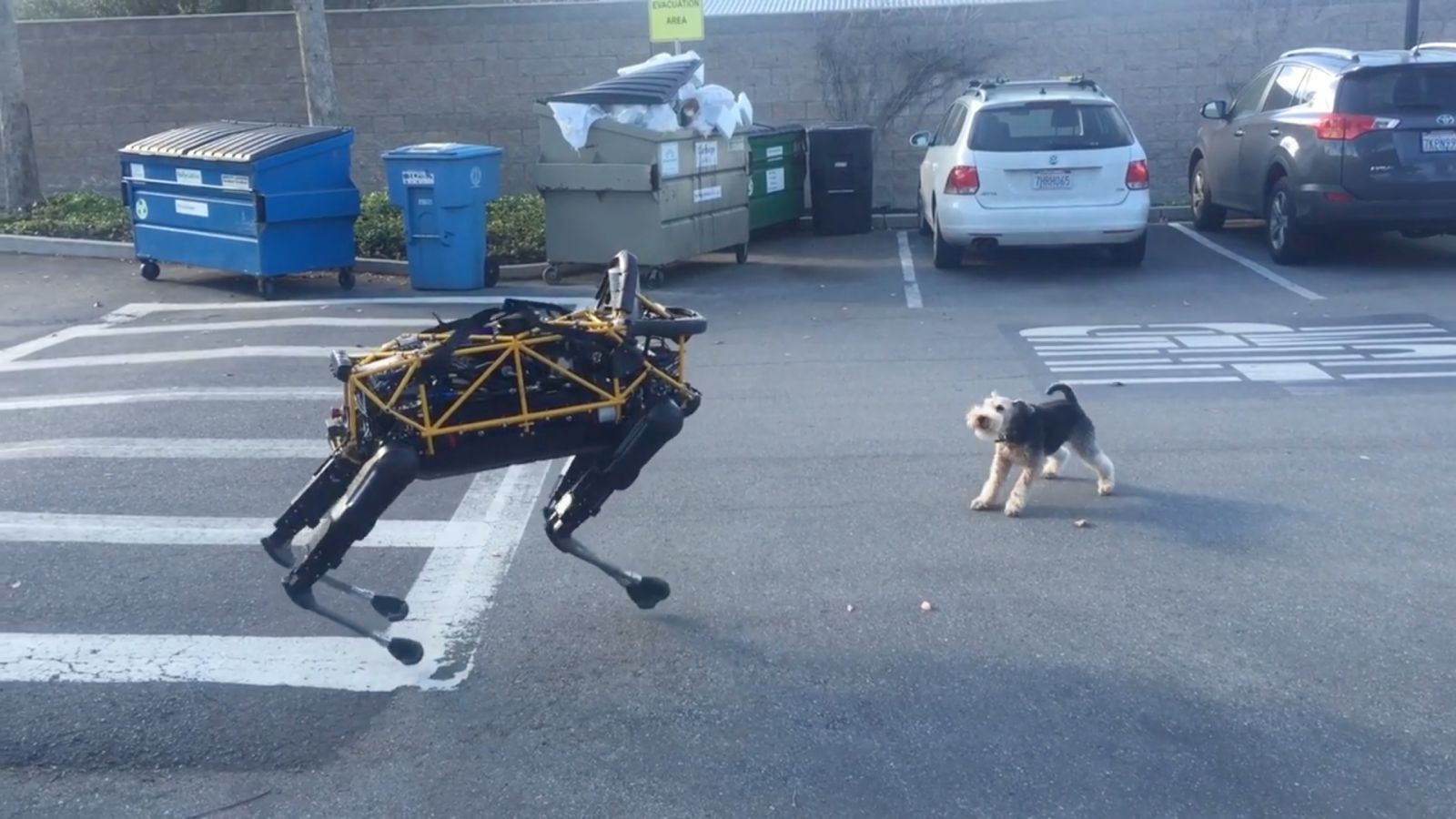 Dogs Are on Our Side in the Fight Against the Robot Uprising
